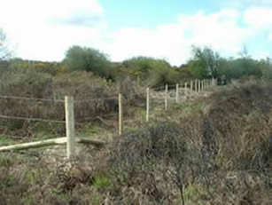 Stock fencing on Goss Moor